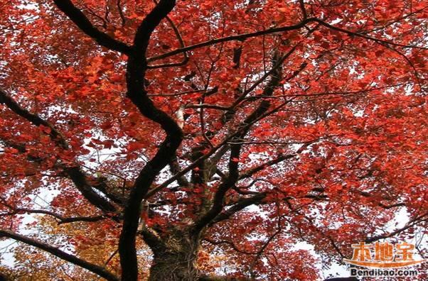 石门国家森林公园好玩吗?从化石门公园旅游攻略