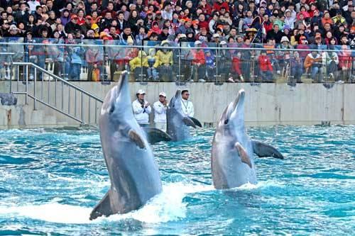 深圳海洋世界-海豚表演