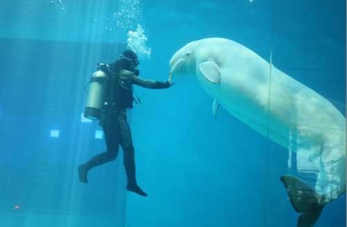 深圳海洋世界-海底表演